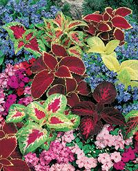 Small Shade Garden Ideas Photograph Annual Flowerbed Combi