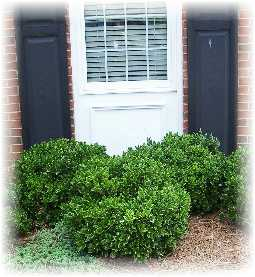 Best foundation shrubs for Low maintenance bushes for shade